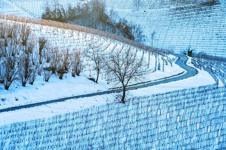 Narrow road in snowed vineyards Snowed Hills Snowed Landscape Snowed Vineyards Winter Winterscapes Frozen Nature Wintertime Silence Of Nature Pure Purenature Vineyards In Winter Snow Winter Cold Temperature Nature Beauty In Nature Weather Day Frozen Scenics Tranquility Outdoors No People Tranquil Scene Landscape