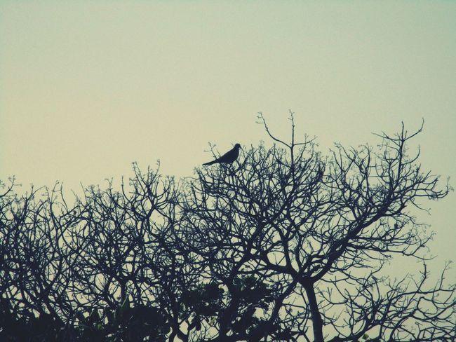 Outdoors Garden Birds Trees @sekharchinta, Hyderabad India