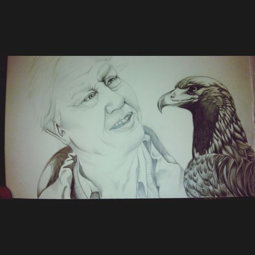 A work in progress Drawing Artist Jenartist DavidAttenborough