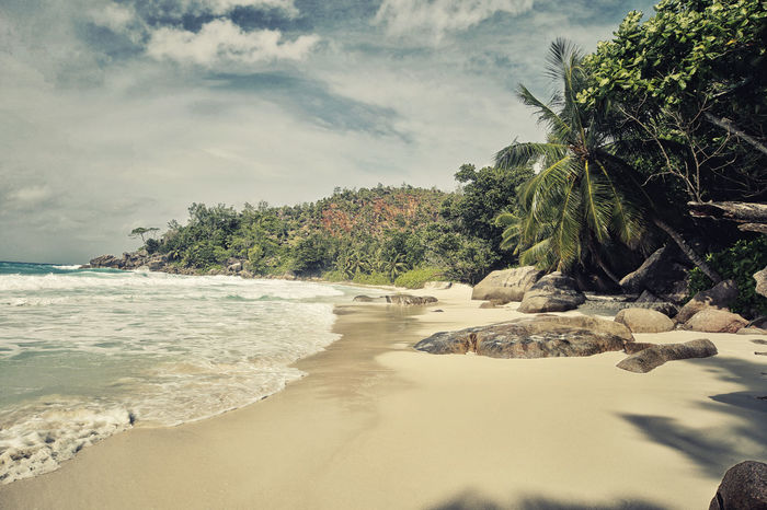 Beach Beauty In Nature Day Nature No People Outdoors Palm Tree Praslin Praslin Seychelles Sand Scenics Sea Seychelles Seychelles Islands Sky Tranquility Travel Destinations Travel Photography Tree Water Anse Georgette