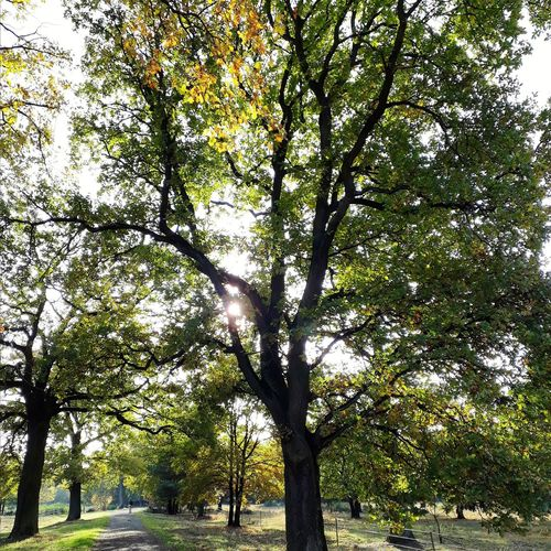 Rösrath Wahnerheide Köln Bergisch Bergischesland Heide Heathland  Herbst Herbstfärbung Autumn Autumncolours Tree Branch Sky