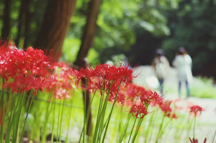 EyeEm Selects Plant Growth Focus On Foreground Beauty In Nature Red Nature Day Flowering Plant Flower Outdoors Selective Focus No People Vulnerability  Tree Leaf Freshness Close-up Fragility Plant Part Green Color