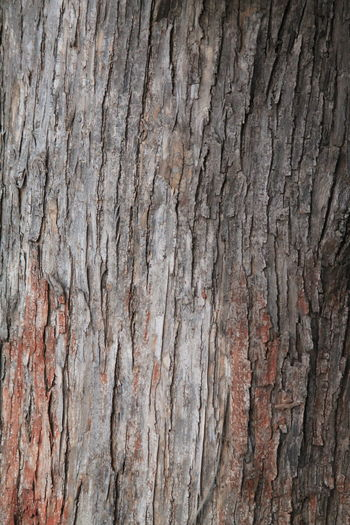 Backgrounds Bark Brown Close-up Cracked Day Detail Full Frame Natural Pattern Nature No People Outdoors Pattern Plant Bark Rough Textured  Tree Tree Trunk Wood Wood - Material