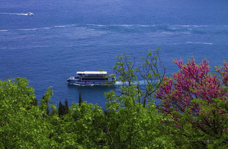 Bosphorus Erguvan / Judas Tree Traveling Spring EyeEm Nature Lover EyeEm Gallery