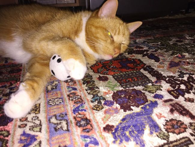 Cat Collection Cat Toy Cat Posing Cat Dreams Cat Love Catlifestyle Pets_collection Cube White Cube Pets