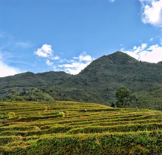 Vietnam SaPa Sky Landscape Plant Beauty In Nature Scenics - Nature Environment Cloud - Sky Tranquil Scene Tranquility Land Growth Agriculture Field Mountain Rural Scene Nature No People Day Tree Crop