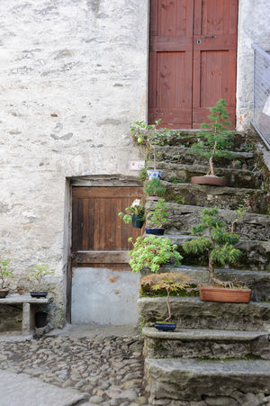Quite and peace in italian alps village Country Doors Wall Architecture Bonsai Building Exterior Built Structure Day Door Doorway Entrance House No People Outdoors Plant Rustic Stone Stone Stair Stone Staircase Window