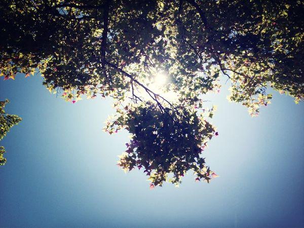 Sunny Day Lookingup
