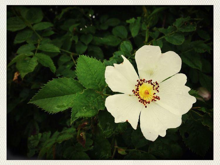 Flowers Urban Nature