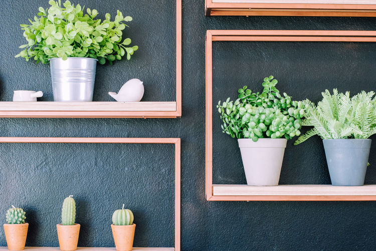 Artificial plant in steel and plastic pot and cactus-shaped candles are placed on blank photo frame for cute decoration in coffee shop Container Domestic Room Flower Flower Pot Flowering Plant Food And Drink Freshness Growth Herb Home Interior Houseplant Indoors  Leaf Nature No People Plant Plant Part Potted Plant Shelf Table Wood - Material