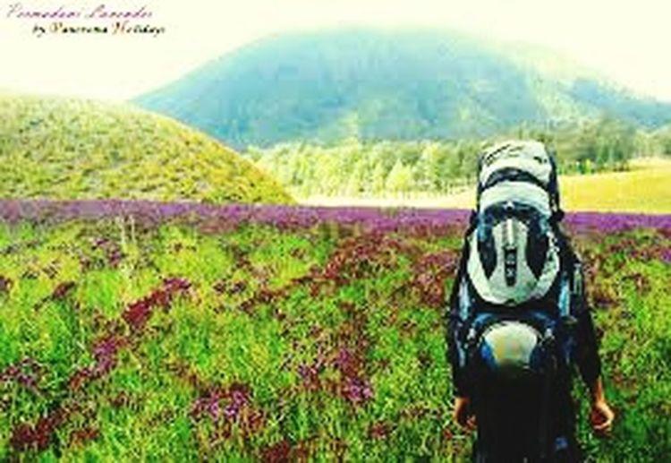 Lavenderflower Jalan2man Indonesia Juara Traveller First Eyeem Photo Indonesiaituindah