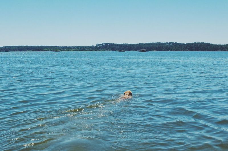 Scenic view of swimming in sea against clear sky