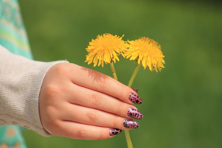 Cropped Image Of Woman With Nail Art Holding Yellow Flowers
