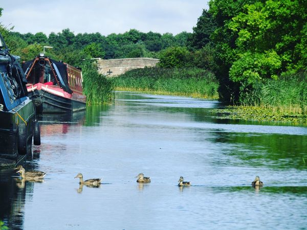 Leeds To Liverpool Canal Canal Liverpool, England Leeds, UK Water_collection Canalboat EyeEmwaterlover Eyeemboats Ducks EyeEm Nature Lover EyeEm Best Shots - Nature Eyeemphoto
