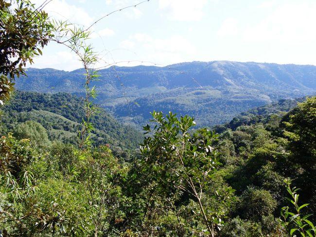 Edge Of The World Forest Woods Mound Montanhas MontanhaAzul