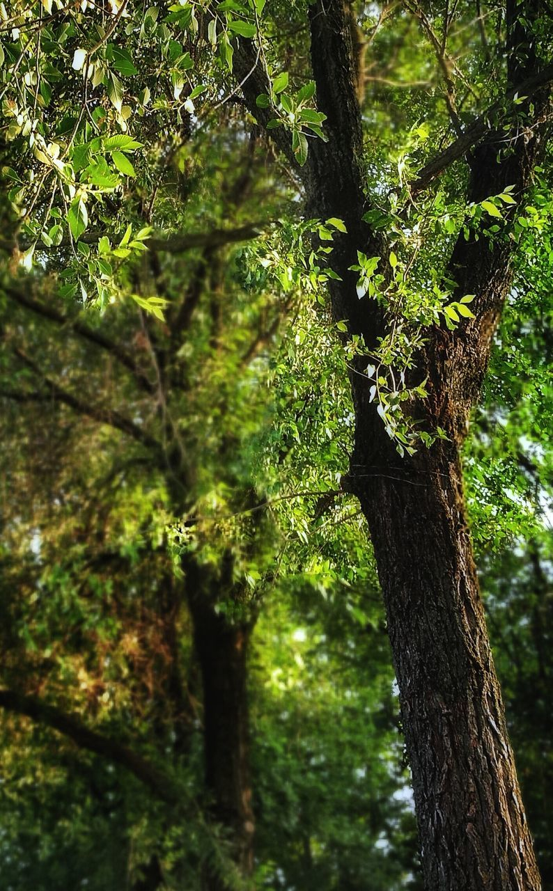 tree trunk, tree, nature, growth, forest, green color, trunk, beauty in nature, outdoors, tranquil scene, day, no people, tranquility, branch