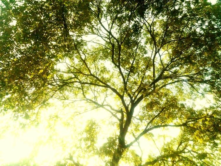 Showcase July Brightday☀ Drive Tree Beauty In Nature Loveit♥ Picoftheday Takeapicture
