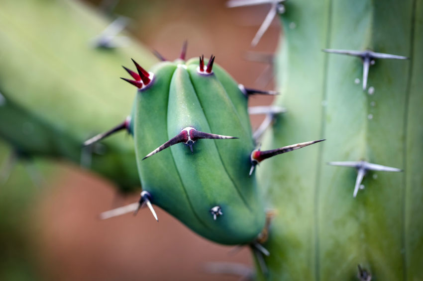 Cactus Cactus Succulent Plant Thorns Sharp Plant Green Growth Green Color Focus On Foreground Day No People Selective Focus Nature Spiked Outdoors Thorn