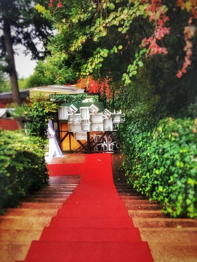 Mihrabatkorusu Istanbul Redcarpet Red Nature Bestoftheday BestEyeemShots Stairs Green Color Green Tree The Way Forward Built Structure Outdoors Architecture Building Exterior No People Day Nature