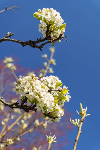 Close-up of white flowers on plant against sky