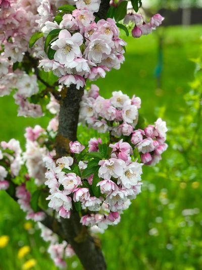 Blossoms Flowering Plant Flower Plant Freshness Vulnerability  Fragility Summer Exploratorium