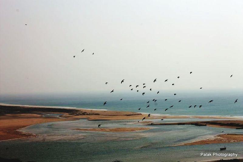 Flyingbirds Sea And Sky Peaceful Nature