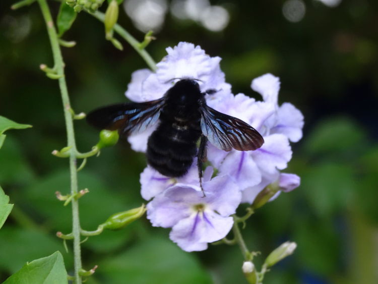 Animal Themes Animals In The Wild Beauty In Nature Blooming Butterfly Butterfly - Insect Close-up Day Flower Flower Head Focus On Foreground Fragility Freshness Growth In Bloom Insect Nature One Animal Outdoors Petal Plant Pollination Purple Springtime Wildlife