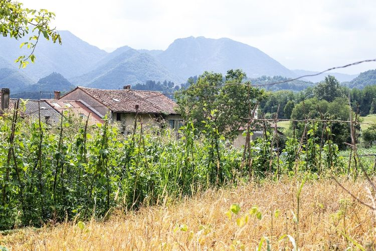 Plants and houses on field by mountains against sky