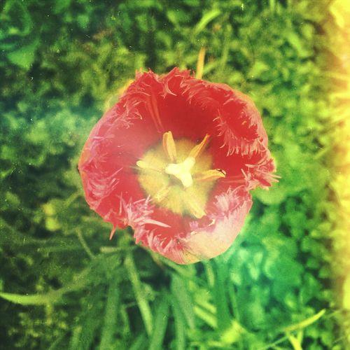 Soul of Flower 1