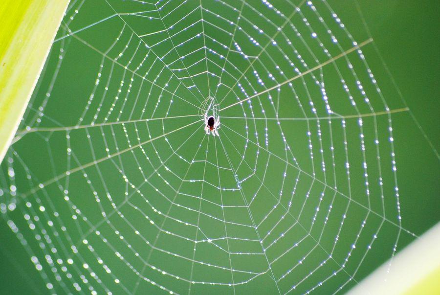 Spinnennetz Spinne Netz Spiderweb Spider Web Spider