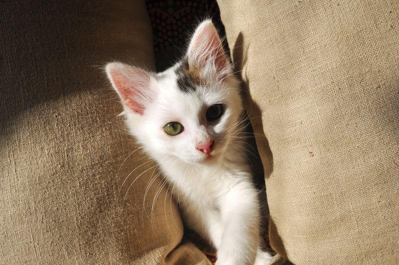 Portrait of white cat relaxing on floor