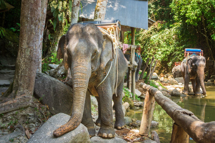 View of elephant in park