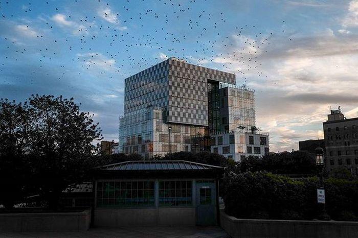 Baltimore Bmore Architecture Bluesky Birds Pennstation Clouds Sunset