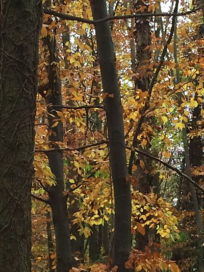 Photography Trees Branches Leaves WoodLand No People Tranquility Nature Autumn Autumn Colors Beauty In Nature Tree Trunk Reds And Pink Shadow And Light Yellow