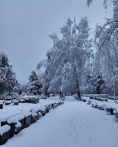 Snow Lumi Nieve Neige Winter Talvi Invierno Hiver Cemetery Hautausmaa Cementerio Cimetiere Valkeakoski Igersvalkeakoski Finland Igersfinland Suomi