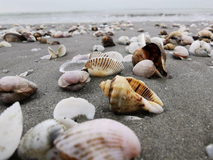 Close-up of seashells on beach