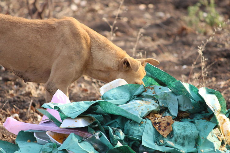 waste food Dog EyeEm Eyeemindia Capture The Moment Street Dog Eating In Field EyeEm Selects Close-up