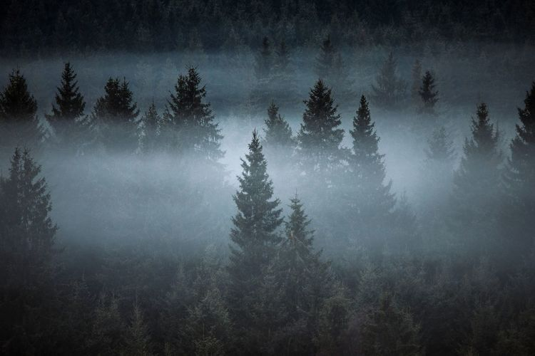 Silhouette trees in forest during foggy weather