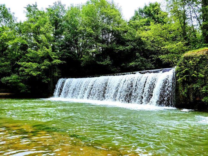 Bath Time Erlaxatu Tree Water Grass Green Color