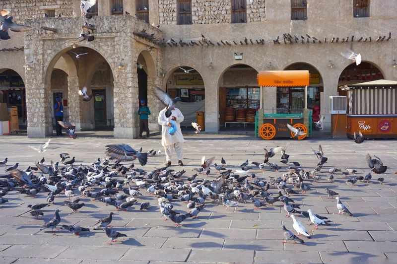 """breakfast"" a man feeding pigeons on the street of a market in doha city, qatar Eyeem Philippines Eyem Best Shots Arabic Doha Qatar Pigeons Birds Flocks Of Birds The Street Photographer - 2018 EyeEm Awards Bird Flying City Flock Of Birds Arch Architectural Column Spread Wings Architecture Building Exterior Flapping"