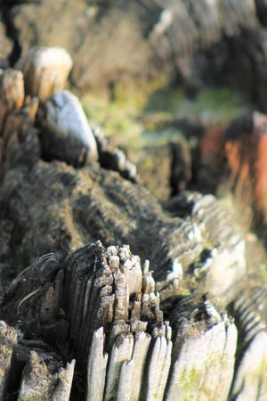 Patterns In Nature Perspectives On Nature Character Old Wood Dock Pillar Neglected By Time Patterns & Textures Patterns In Wood Remnants From Another Time Timeless Wood