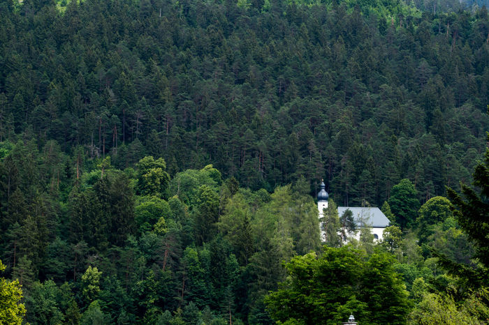 Tree Plant Forest Green Color Land Nature Day Beauty In Nature Scenics - Nature Outdoors No People Architecture WoodLand Tranquility Built Structure Travel Pine Woodland Pine Tree Axvo Garmisch-partenkirchen Sebastians Kirche Church Mountain Mountain View Nature