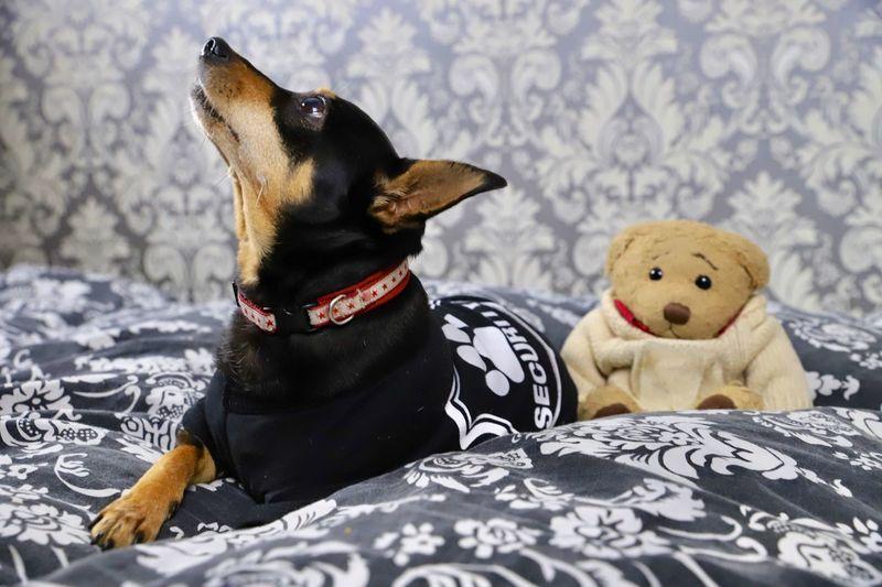 Dog sitting on a toy