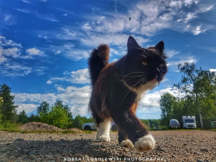 Pets One Animal Cloud - Sky Animal Themes No People Nature Taking Photos Cat cats Sky