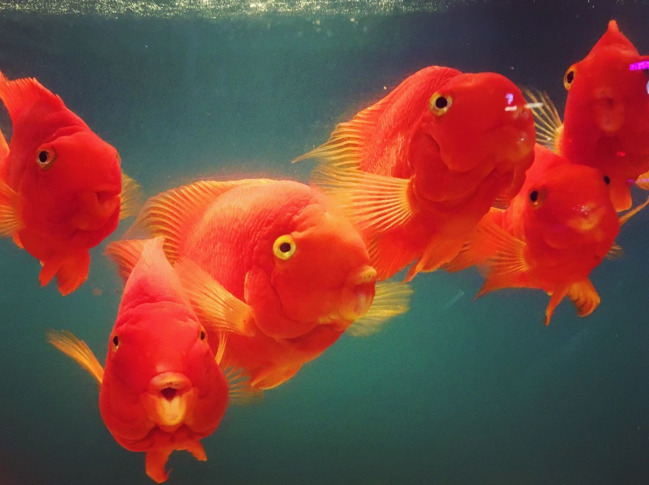 Close-Up Of Fish In Water