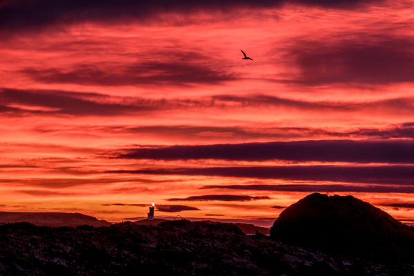 Dawn ELIE Firth Of Forth Lighthouse Nature Outdoors Rocks Schottland Sea Shore Sky Sunrise Water
