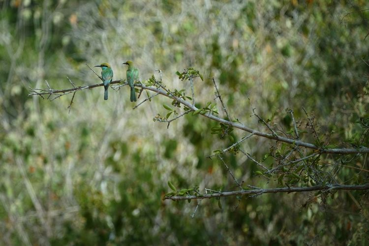 Plant Growth Nature Selective Focus Tree No People Day Land Focus On Foreground Green Color Animal Themes Vertebrate Animal Animal Wildlife Animals In The Wild Outdoors Bird Beauty In Nature Branch Perching