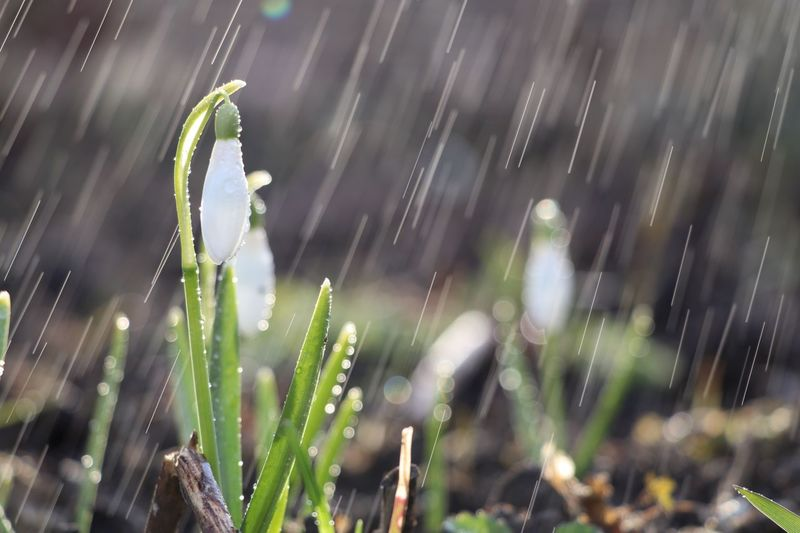 Drop Wet Plant Growth Water Close-up Nature Outdoors Day Vulnerability  Rain Fragility No People Freshness Focus On Foreground Beauty In Nature Selective Focus Sunlight Dew Rainy Season