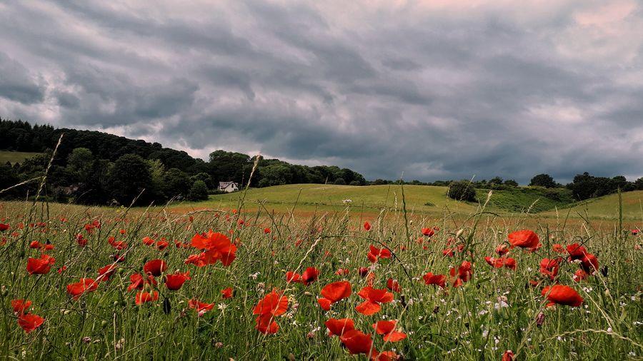 'Field of