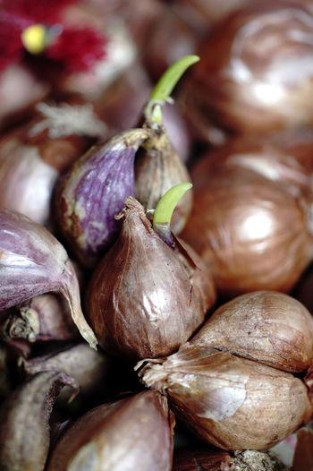 shallot Aggregatum Group Allium Cepa Var. Aggregatum Close-up Food Freshness Healthy Eating No People Shallots